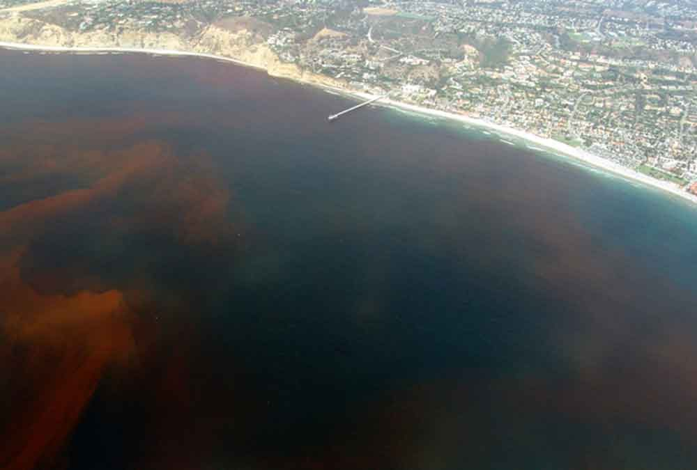 Red tide offshore at La Jolla California